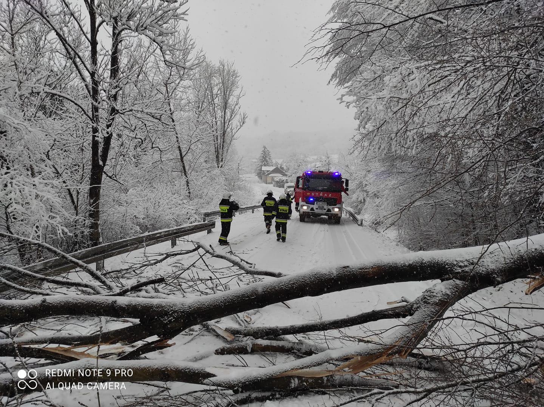 Powalone drzewo i brak prądu w Porażu, Morochowie oraz w gminie Brzozów! - Zdjęcie główne