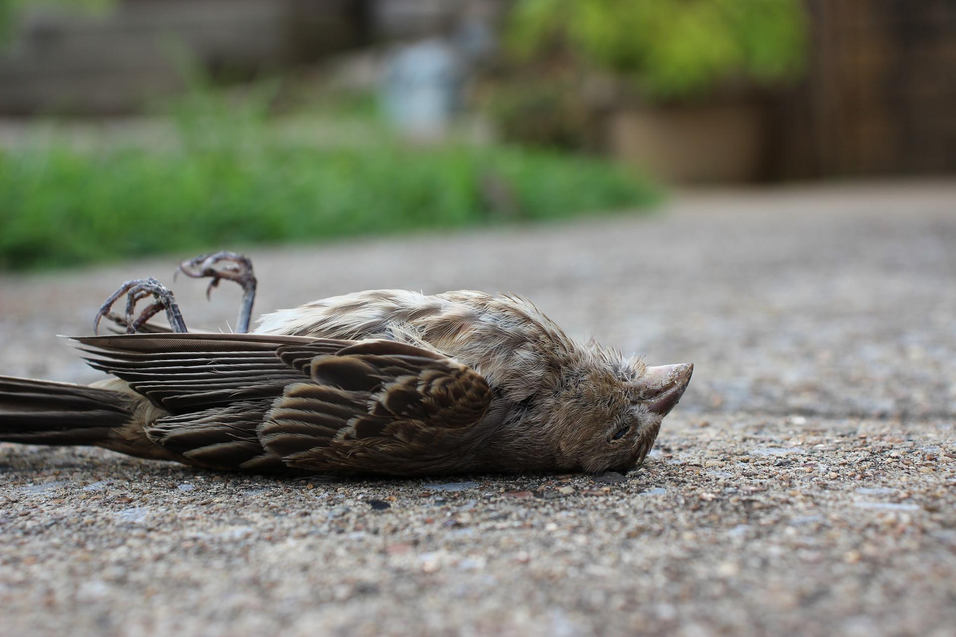 Służby weterynaryjne apelują: Informujcie o przypadkach padnięć dzikich ptaków! - Zdjęcie główne