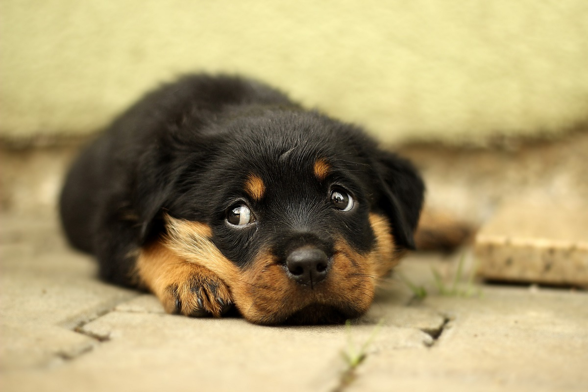 Kary nie odstraszają przed porzucaniem zwierząt. Najgorzej jest w lecie - Zdjęcie główne