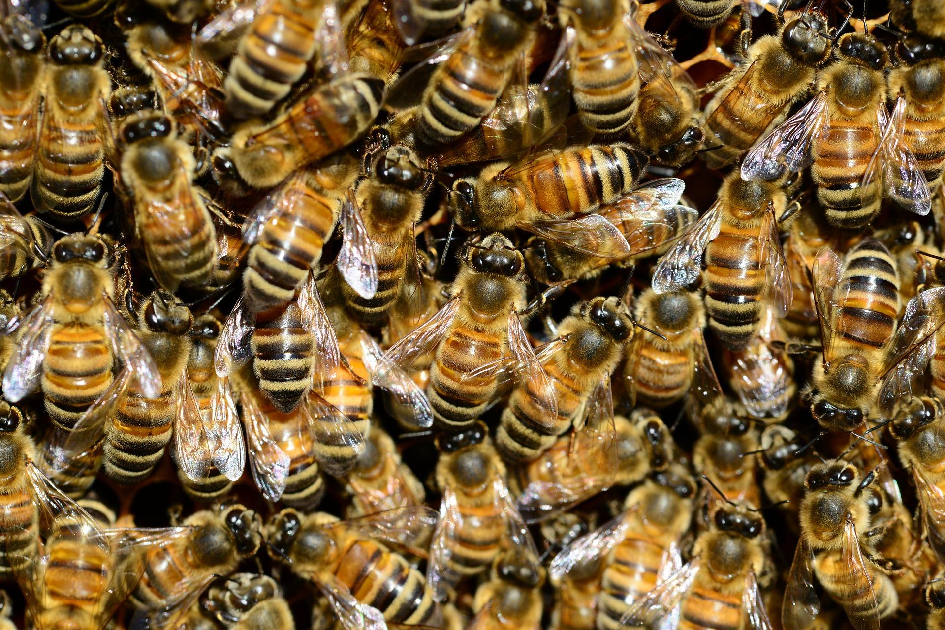 34-latek pogryziony przez pszczoły. Dzielnicowy eskortował go do szpitala - Zdjęcie główne