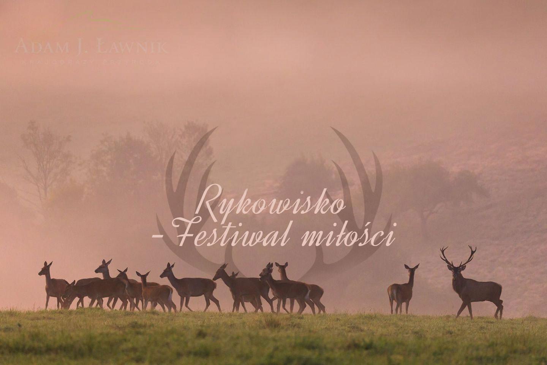 """Konkurs multimedialny - fotografia i film  """"Rykowisko - festiwal miłości"""" - Zdjęcie główne"""