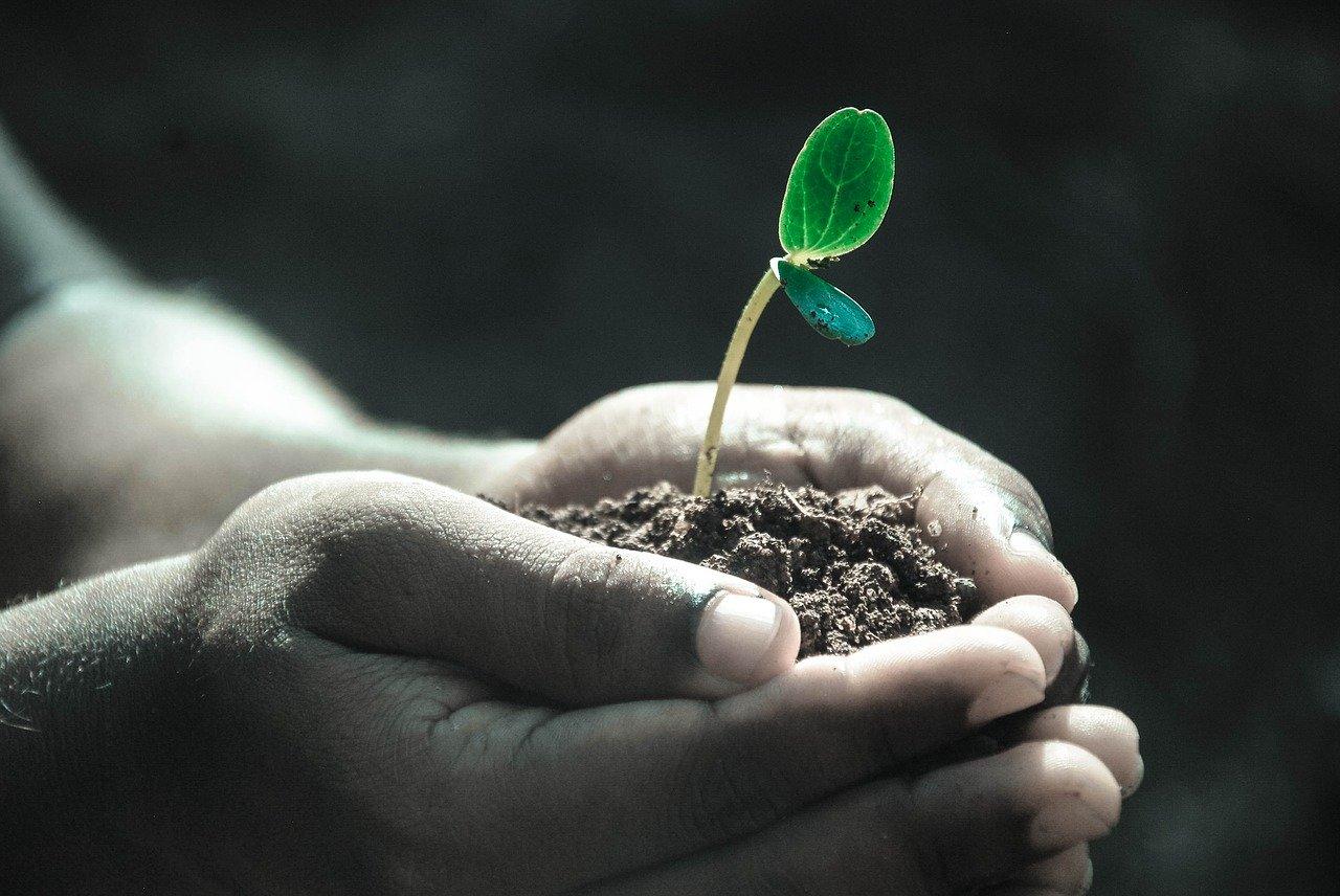 Czy rośliny mogą skutecznie zatrzymać SARS-CoV-2? - Zdjęcie główne