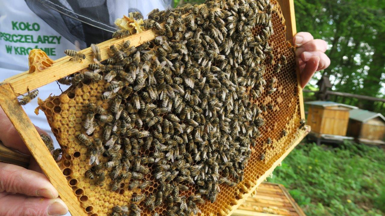 """Świętowali Dzień Pszczół w """"lesie pszczelarskim""""  [ZDJĘCIA] - Zdjęcie główne"""