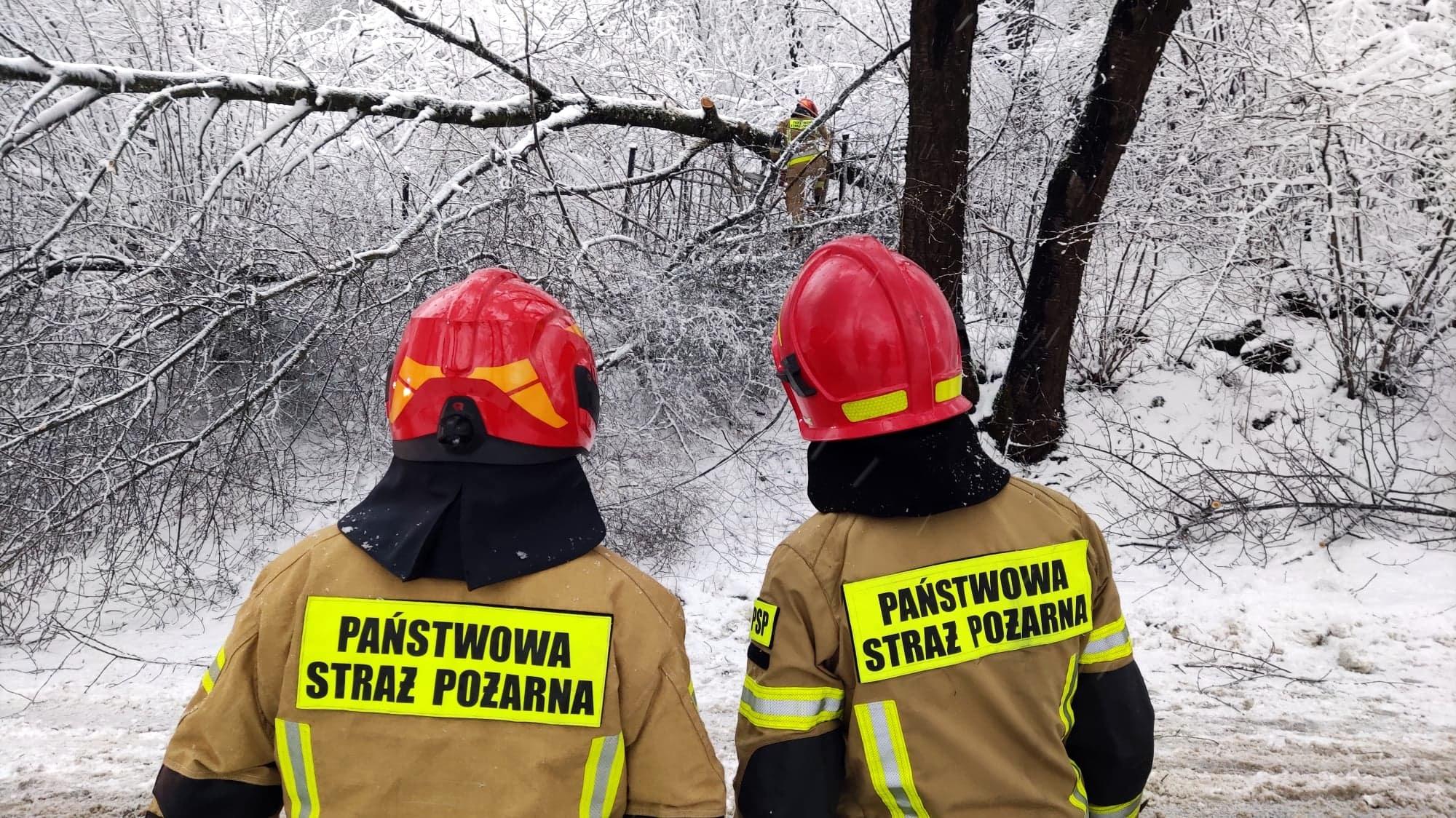 SANOK: Ciężki śnieg powalił drzewo na Kiczurach [FOTO+VIDEO] - Zdjęcie główne