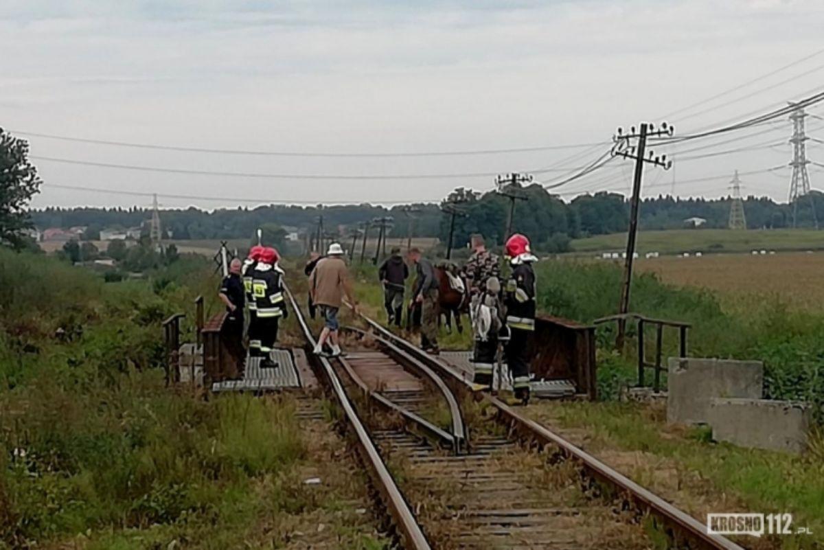 REGION: Koń wstrzymał ruch pociągów   - Zdjęcie główne