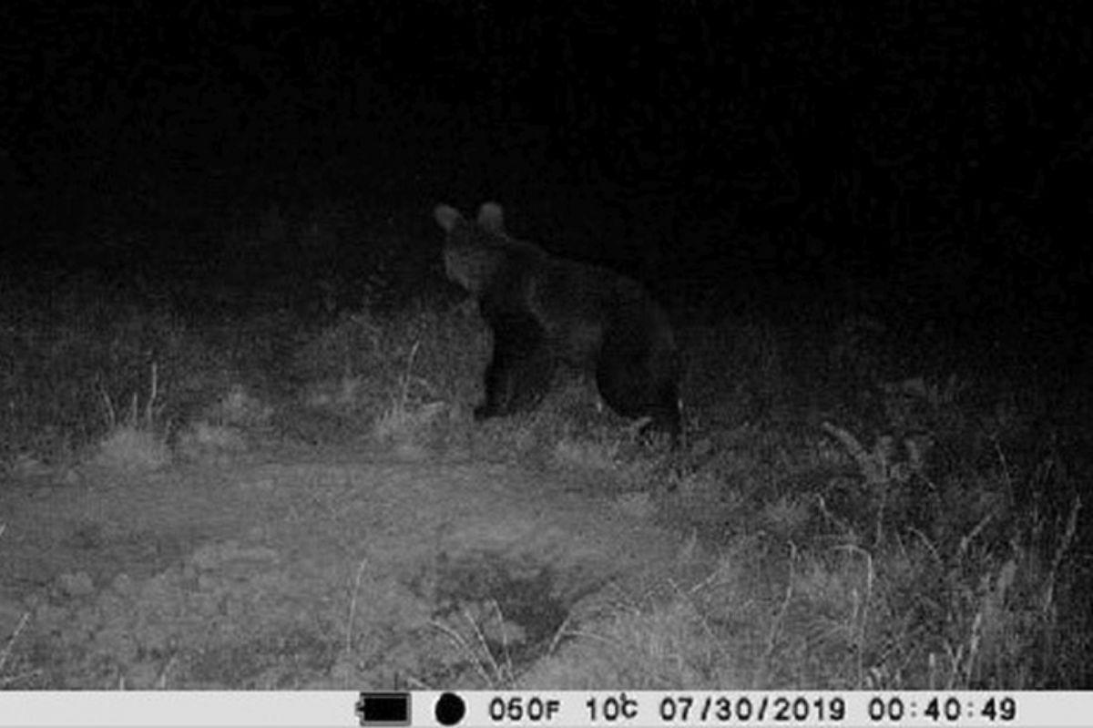 Niedźwiedź znów widziany na terenie gminy Dukla - Zdjęcie główne
