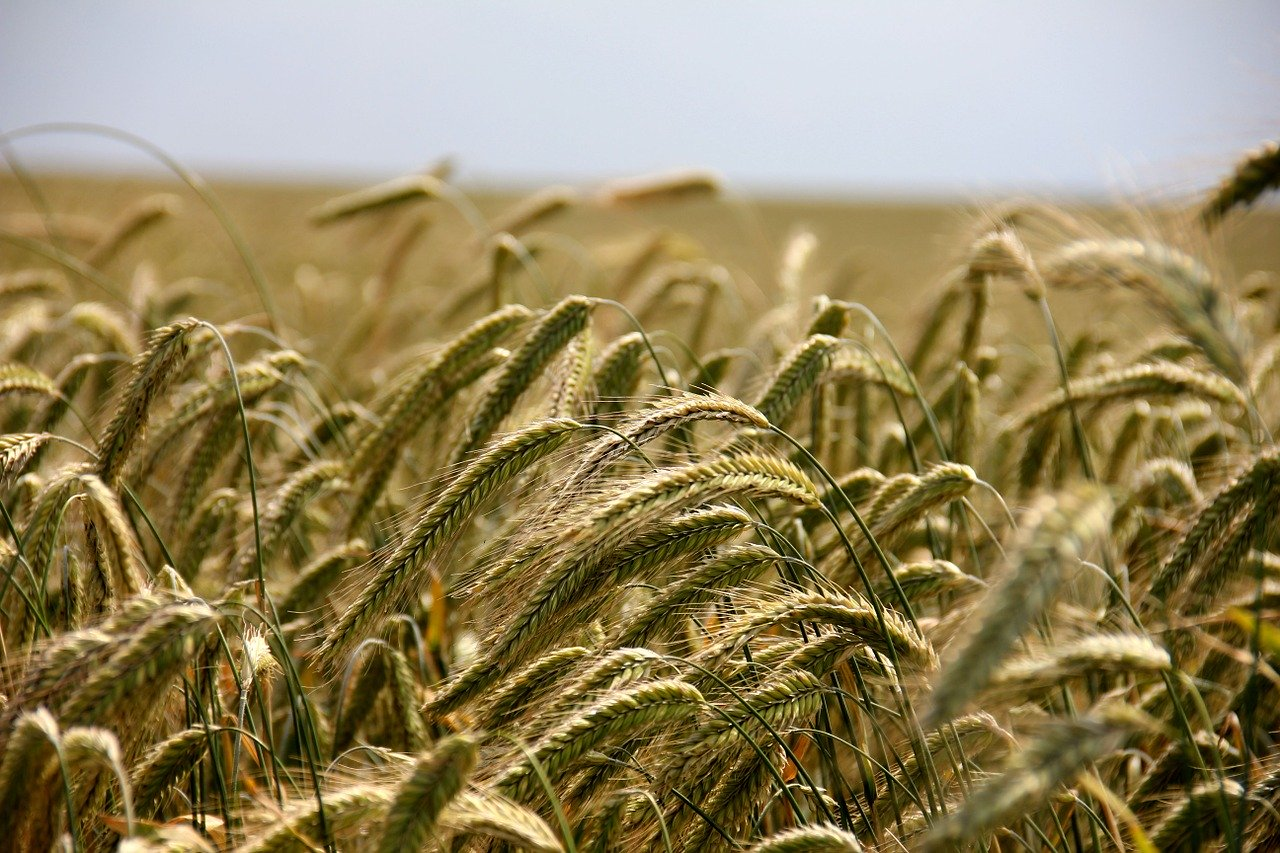 Przyszłością ekologiczna uprawa roślin bez chemikaliów - Zdjęcie główne