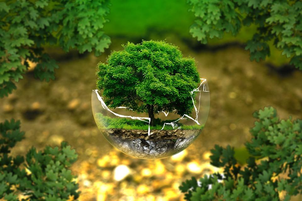 Jaki jest plan na las? Niesamowity film [VIDEO] - Zdjęcie główne