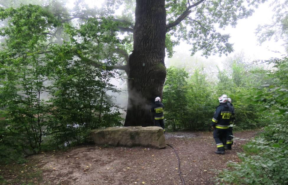 Palił się pomnikowy dąb Wincenty [FOTO+VIDEO] - Zdjęcie główne