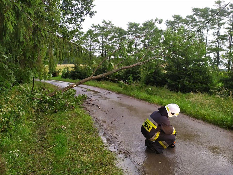 Myczków: Drzewo spadło na linię wysokiego napięcia [FOTO] - Zdjęcie główne