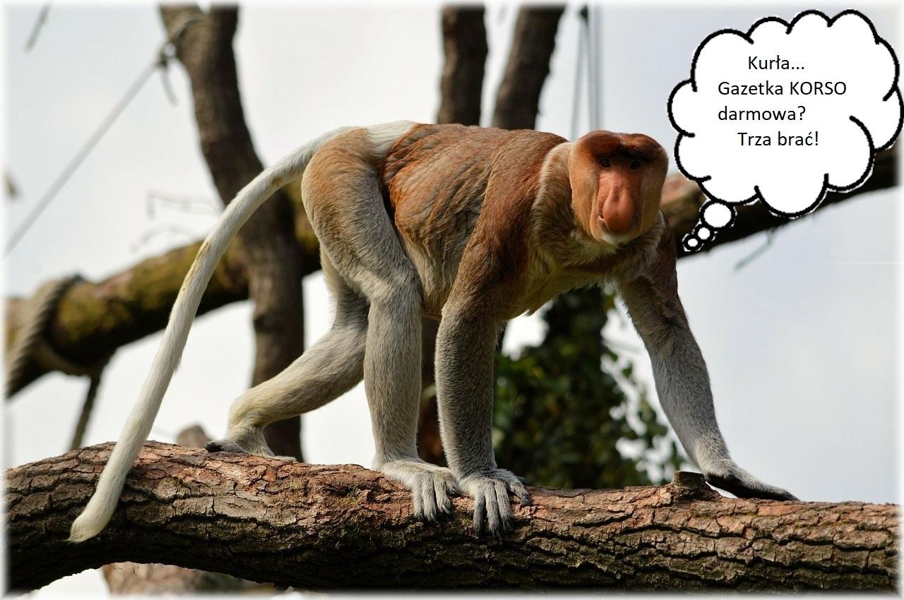 Mamy dzisiaj Dzień małpy! - Zdjęcie główne