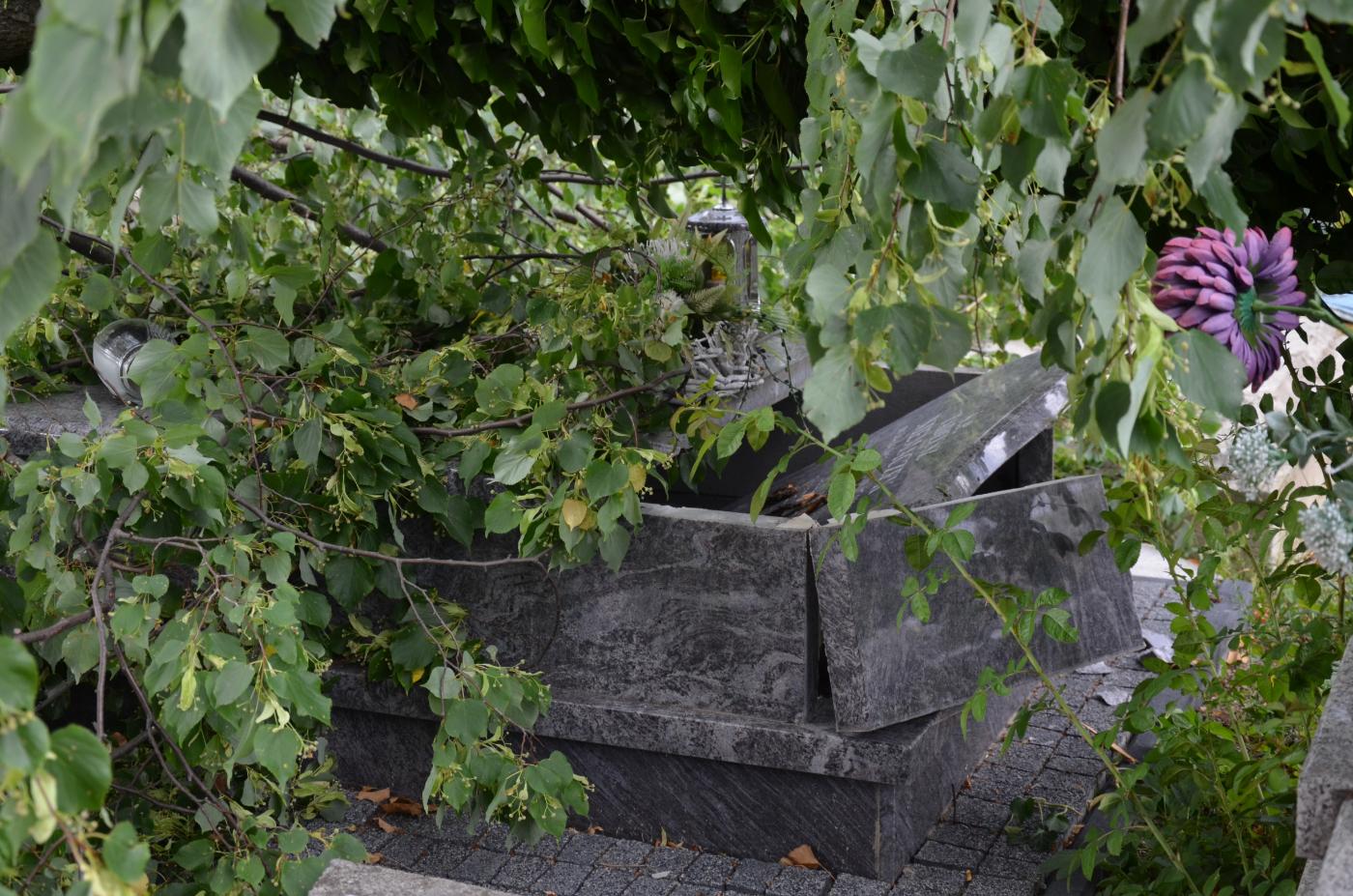 Powalone drzewo zniszczyło nagrobki na cmentarzu centralnym w Sanoku [ZDJĘCIA+WIDEO] - Zdjęcie główne