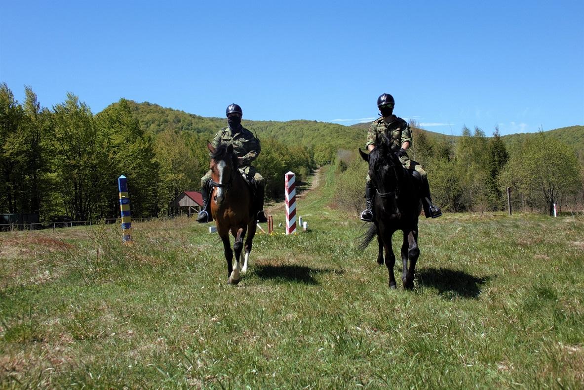 Służbowe psy i konie straży granicznej mają zapewnioną dożywotnią opiekę [ZDJĘCIA] - Zdjęcie główne