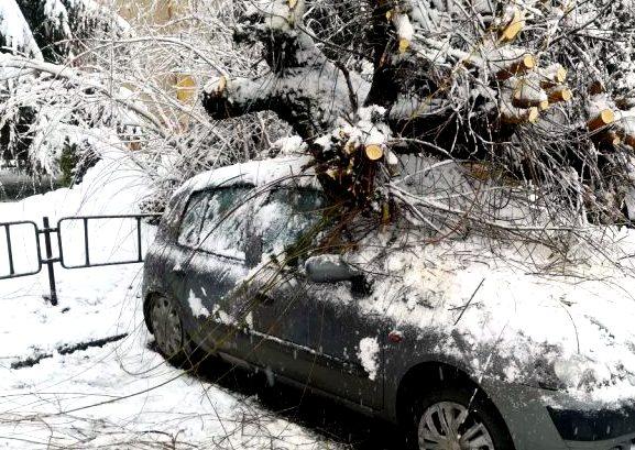 Drzewo spadło na zaparkowany samochód [FOTO] - Zdjęcie główne