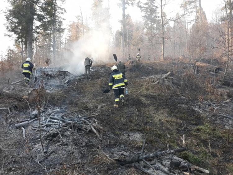 Pożar lasu w Bieszczadach. Palił się szczyt pasma na Otrycie [FOTO] - Zdjęcie główne