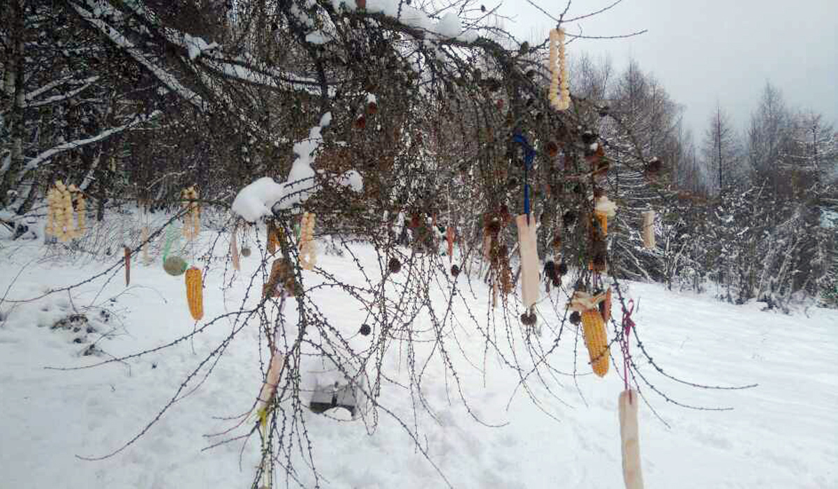Turyści zawieszają żywność na drzewach - Zdjęcie główne