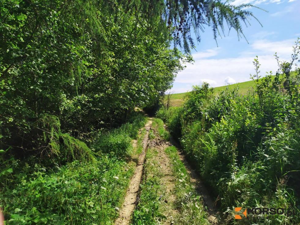 Połączcie się z naturą dzięki wycieczkom przyrodniczym w BdPN! - Zdjęcie główne