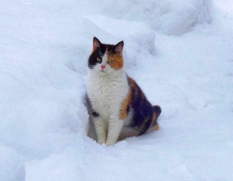 Jak dbać o zwierzęta w czasie zimy? - Zdjęcie główne