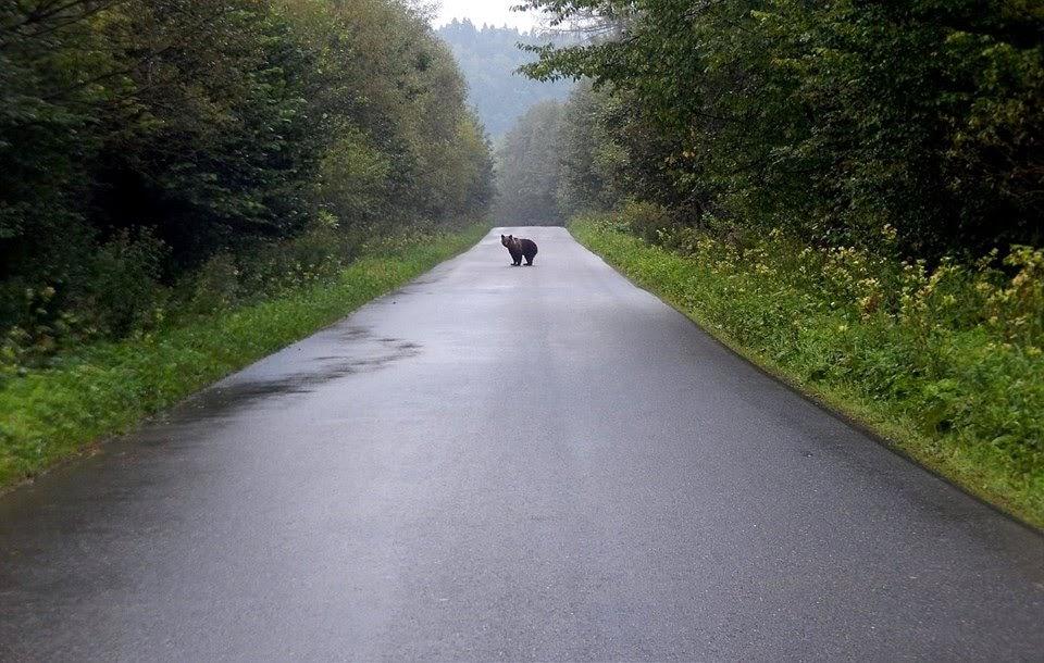 Stary niedźwiedź mocno (nie) śpi - Zdjęcie główne