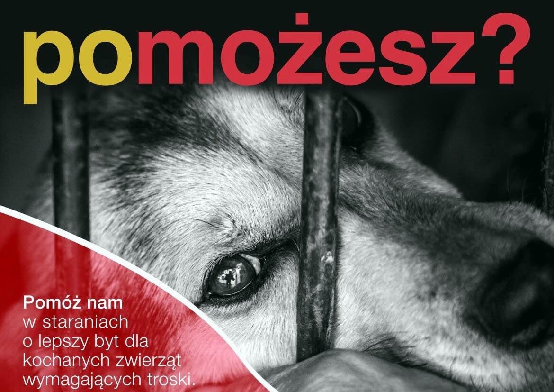 Kojce sanockiego przytuliska dla zwierząt wymagają remontu. Możemy pomóc społecznikom! - Zdjęcie główne