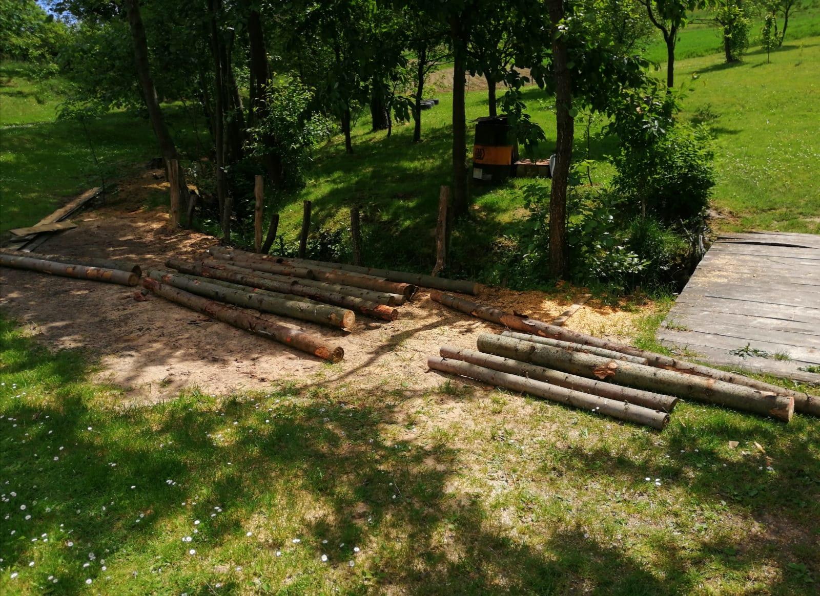 Złodziej drewna złapany. Pracowity dzień Straży Leśnej [ZDJĘCIA] - Zdjęcie główne