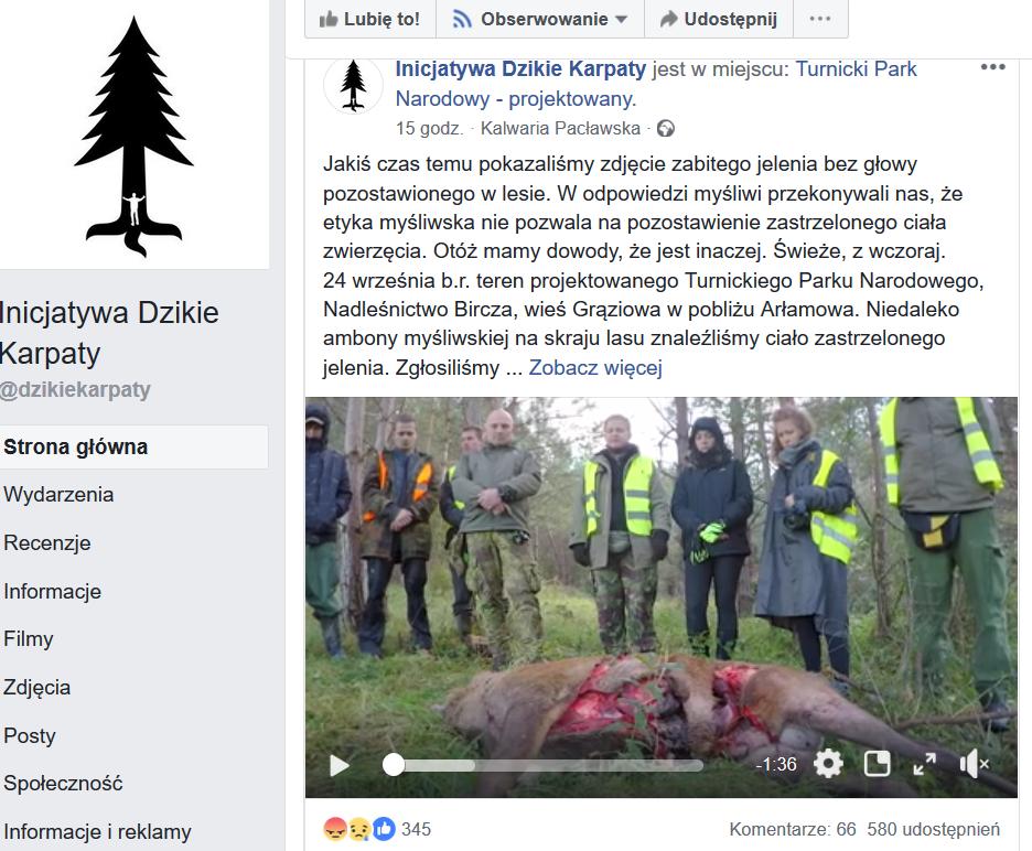 Lasy odpowiadają Inicjatywie Dzikie Karpaty: Jeleń został zrogowany przez rywala - Zdjęcie główne