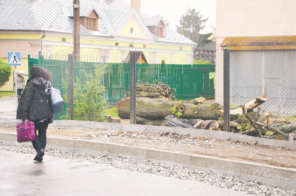 Co stało się z kasztanami na ulicy Żwirki i Wigury w Sanoku? - Zdjęcie główne
