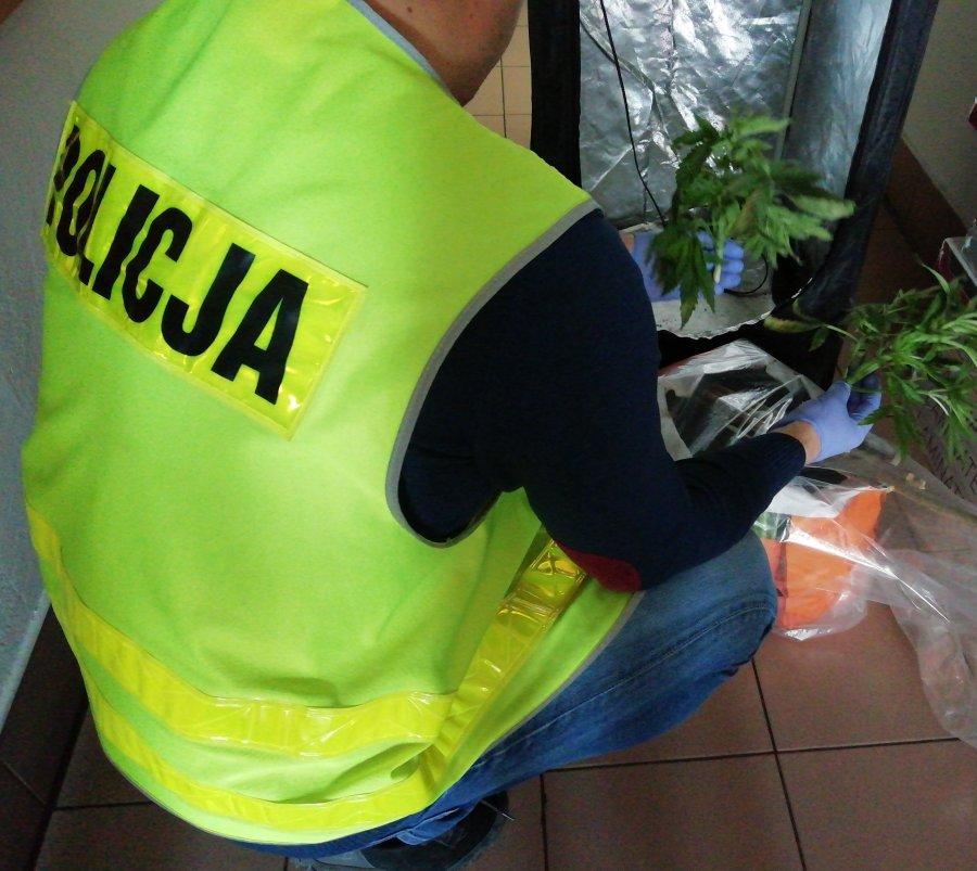 Z REGIONU. 27-latek odpowie za przestępstwa narkotykowe [FOTO] - Zdjęcie główne
