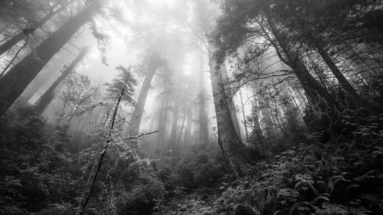 PRZYSIETNICA: Starszy mężczyzna popełnił samobójstwo w lesie - Zdjęcie główne