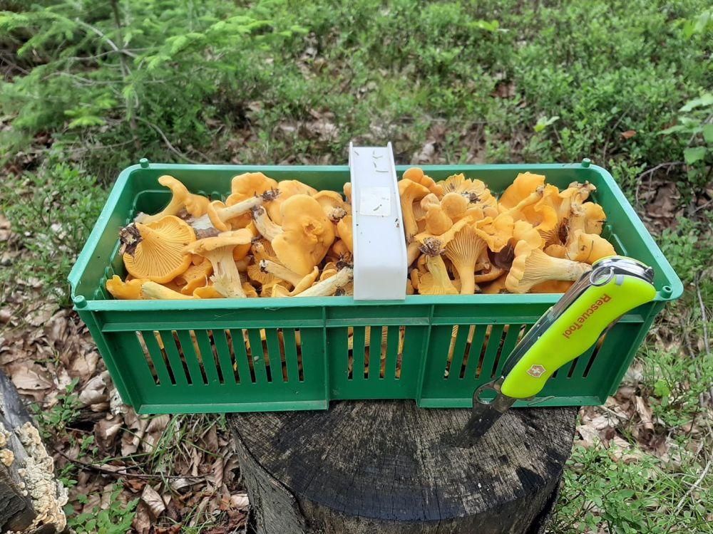 Uważaj na trujące grzyby! - Zdjęcie główne