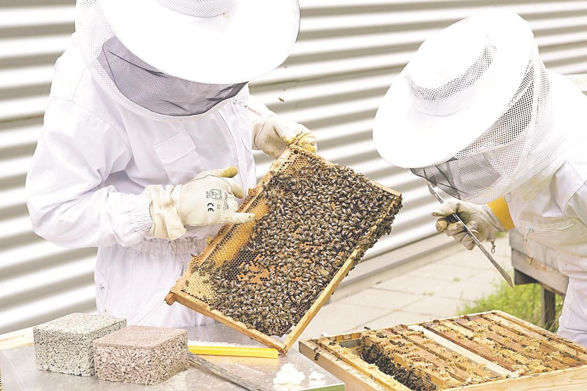 Sekrety pszczelarstwa zdradza Andrzej Piotrowski, pszczelarz z wieloletnim stażem WYWIAD - Zdjęcie główne