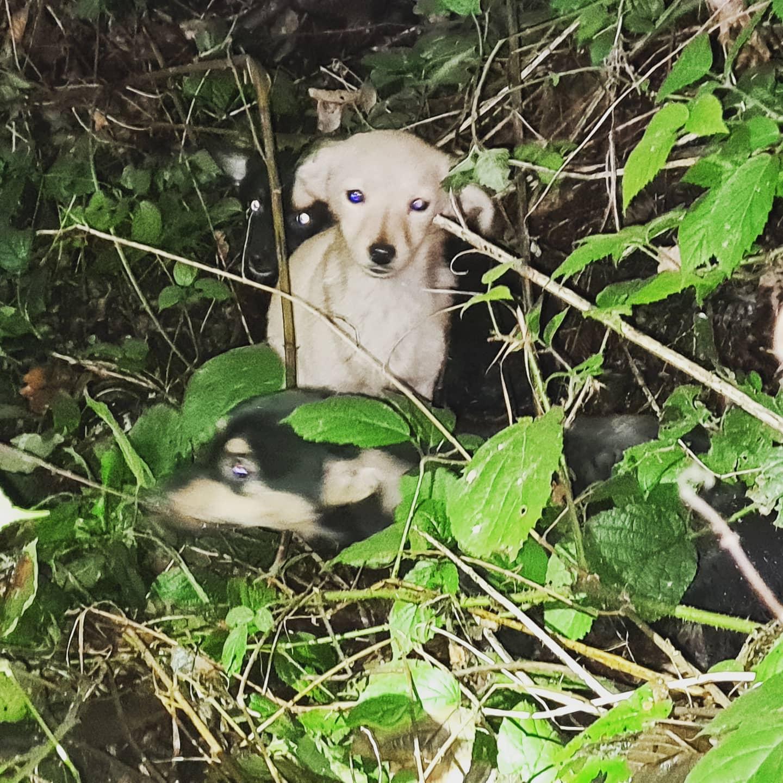 Porzucił suczkę z 5 szczeniakami w lesie. Psy były w fatalnym stanie [FOTO] - Zdjęcie główne