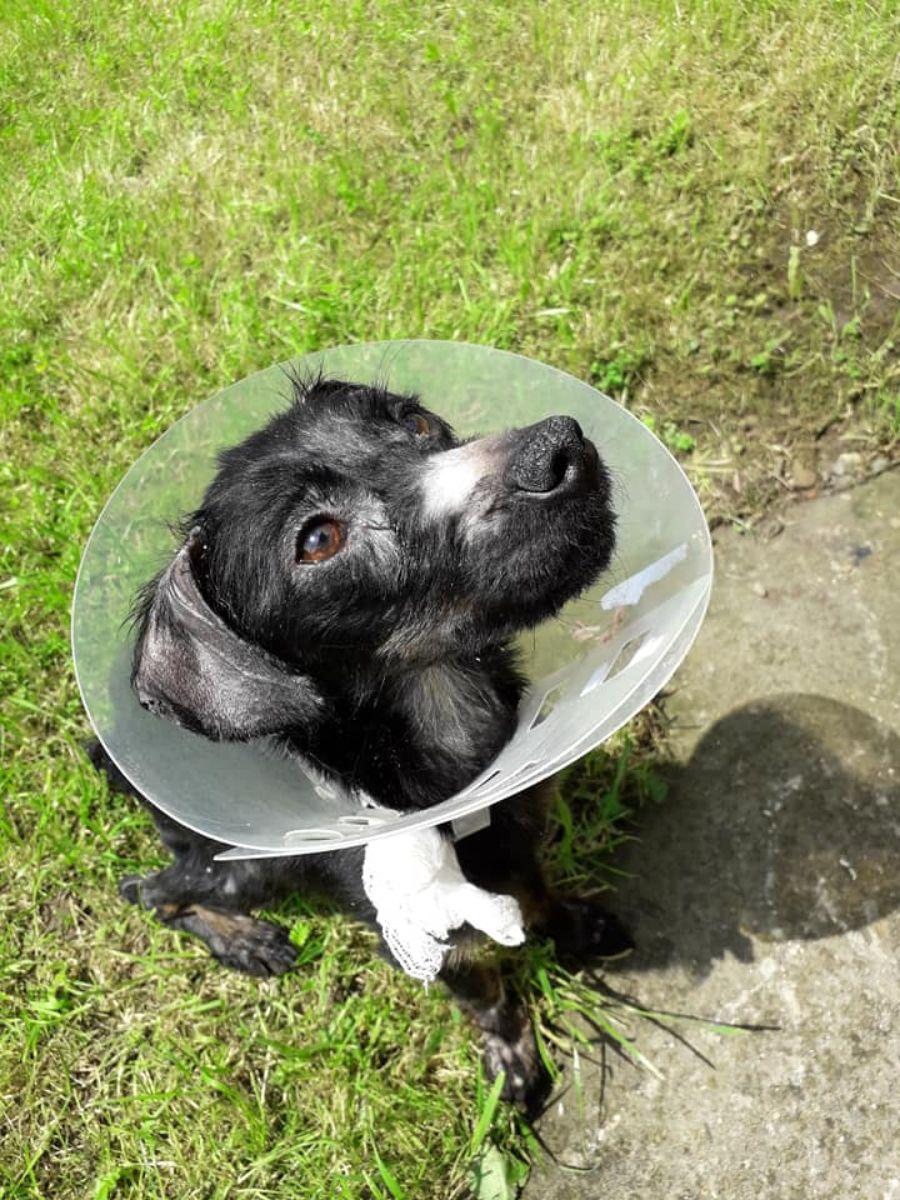 Zagłodzili 6 miesięcznego psa prawie na śmierć. Pomoc przyszła w ostatniej chwili [FOTO] - Zdjęcie główne