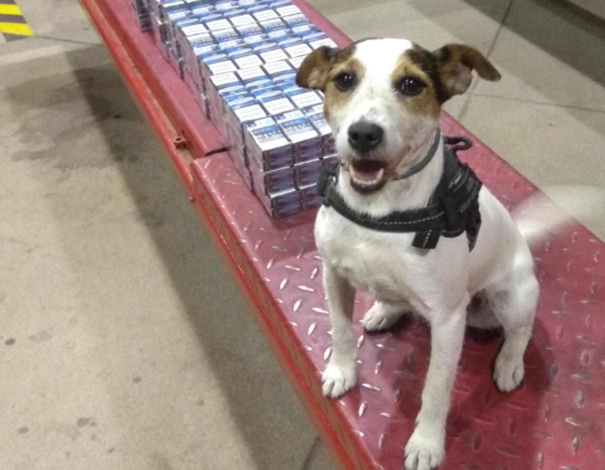 Medyka: Pies Lucy po raz kolejny wytropił przemytników [FOTO] - Zdjęcie główne