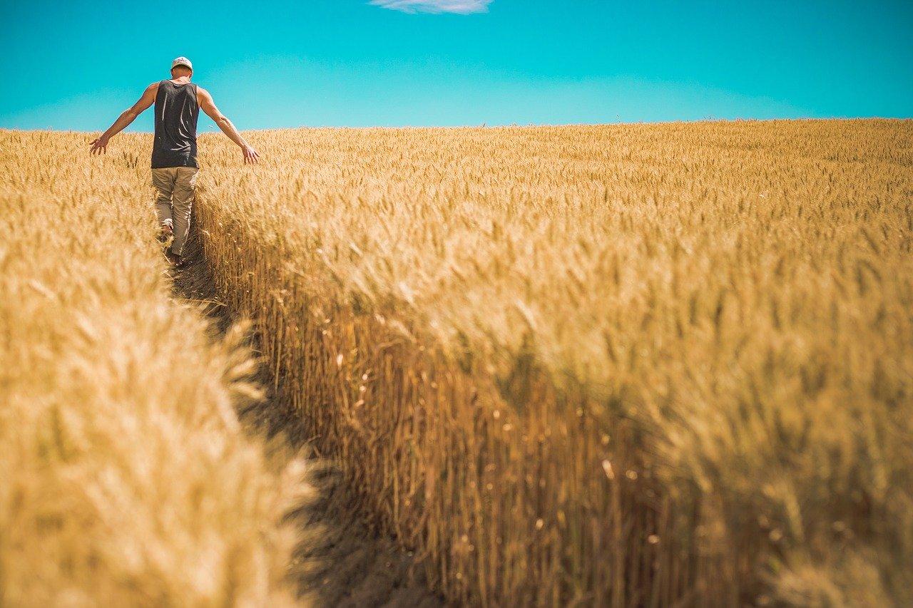 Rolnicy poszkodowani przez COVID-19 dostaną nadzwyczajne wsparcie - Zdjęcie główne