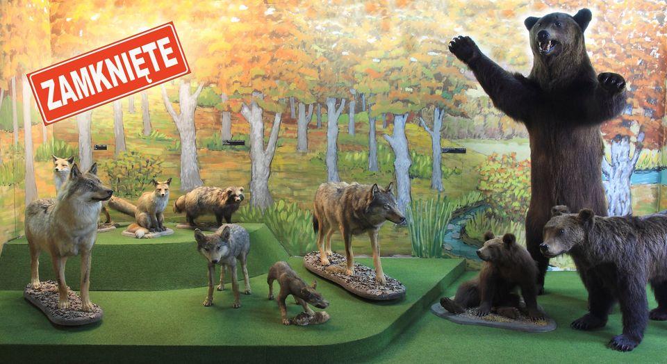 Ustrzyki Dolne. Zamknięcie Muzeum Przyrodniczego Bieszczadzkiego Parku Narodowego [FOTO] - Zdjęcie główne