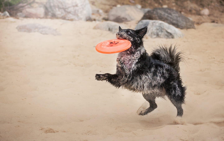 MRZYGŁÓD: Trening dogfrisbee z Kają Różańską! - Zdjęcie główne