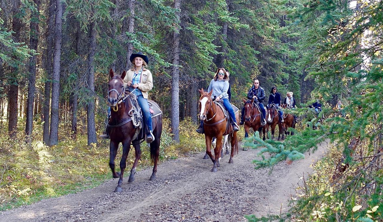 UWAGA! Zakaz wstępu na fragment szlaku konnego w Leśnictwie Serednica - Zdjęcie główne
