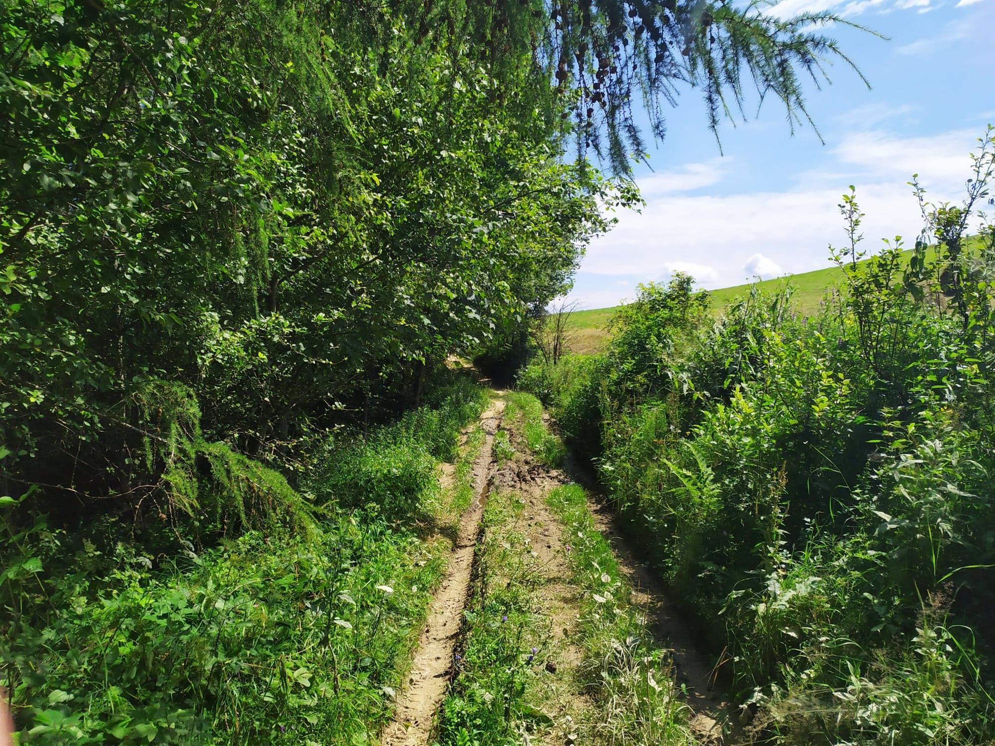 Bieszczady: Szlakiem zielonym z Górzanki do Bukowca [FOTO] - Zdjęcie główne