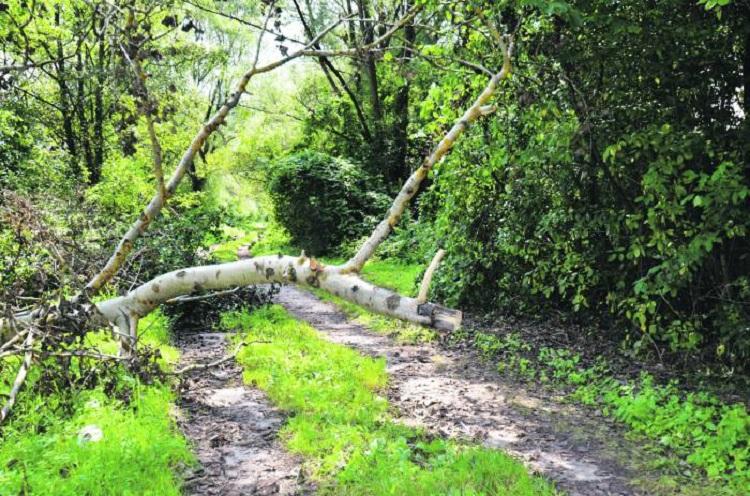Problematyczne drzewo - Zdjęcie główne