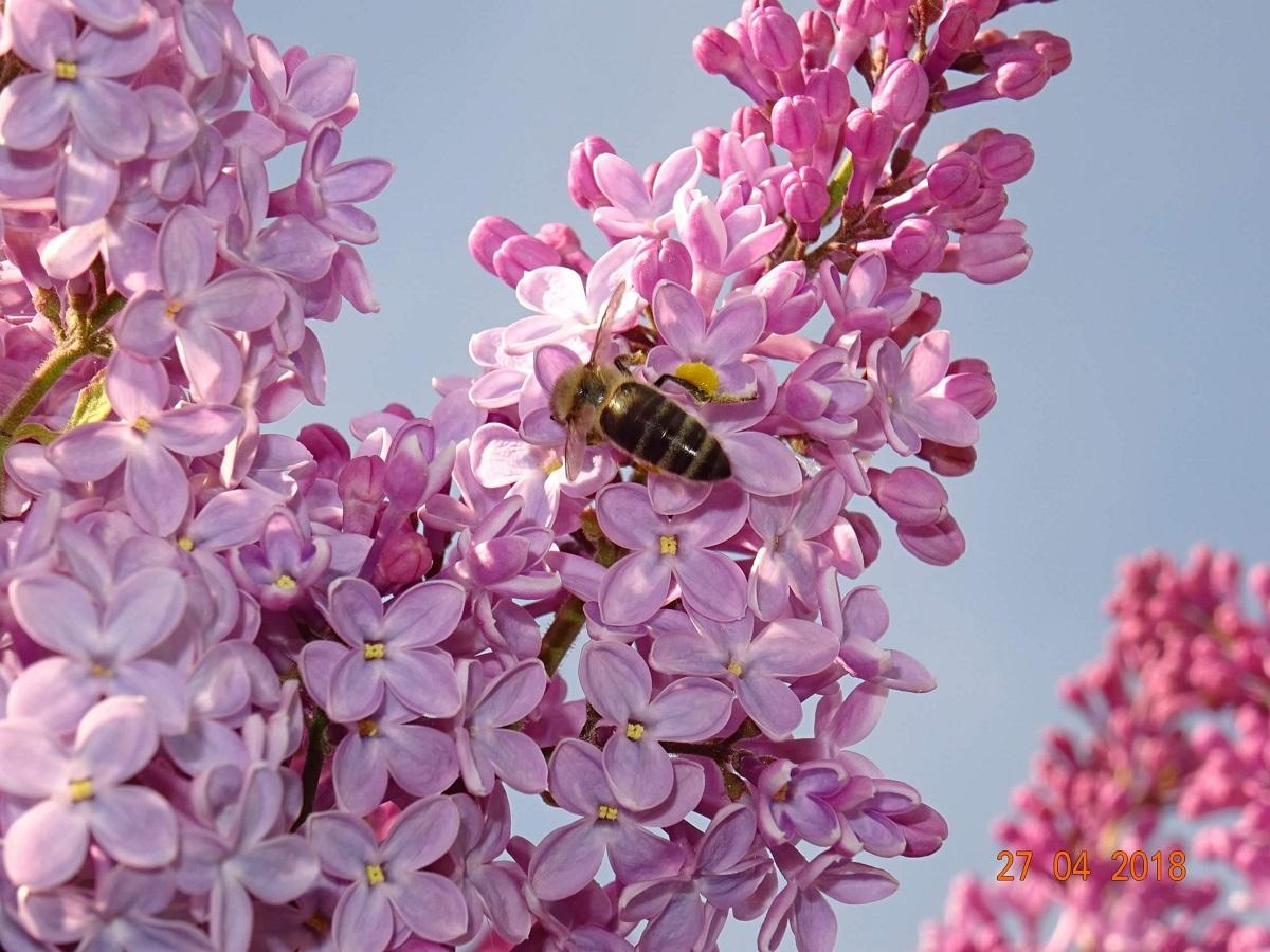 Nie zapominajmy o pszczołach - Zdjęcie główne