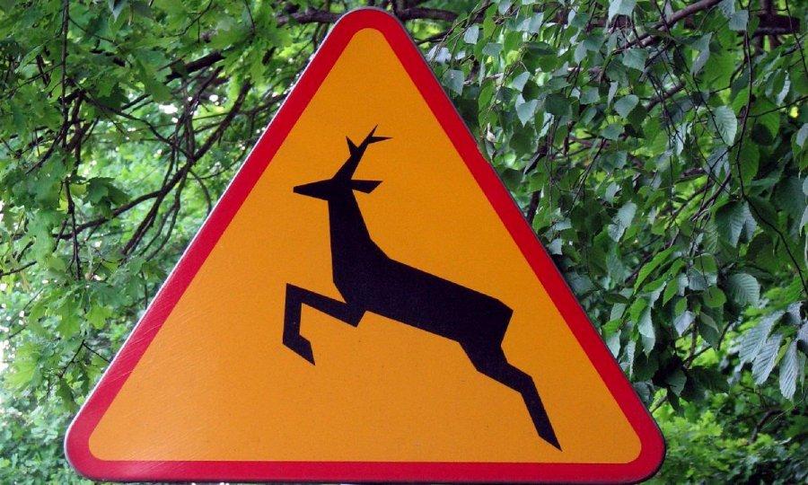 Uwaga na zwierzęta leśne  - Zdjęcie główne