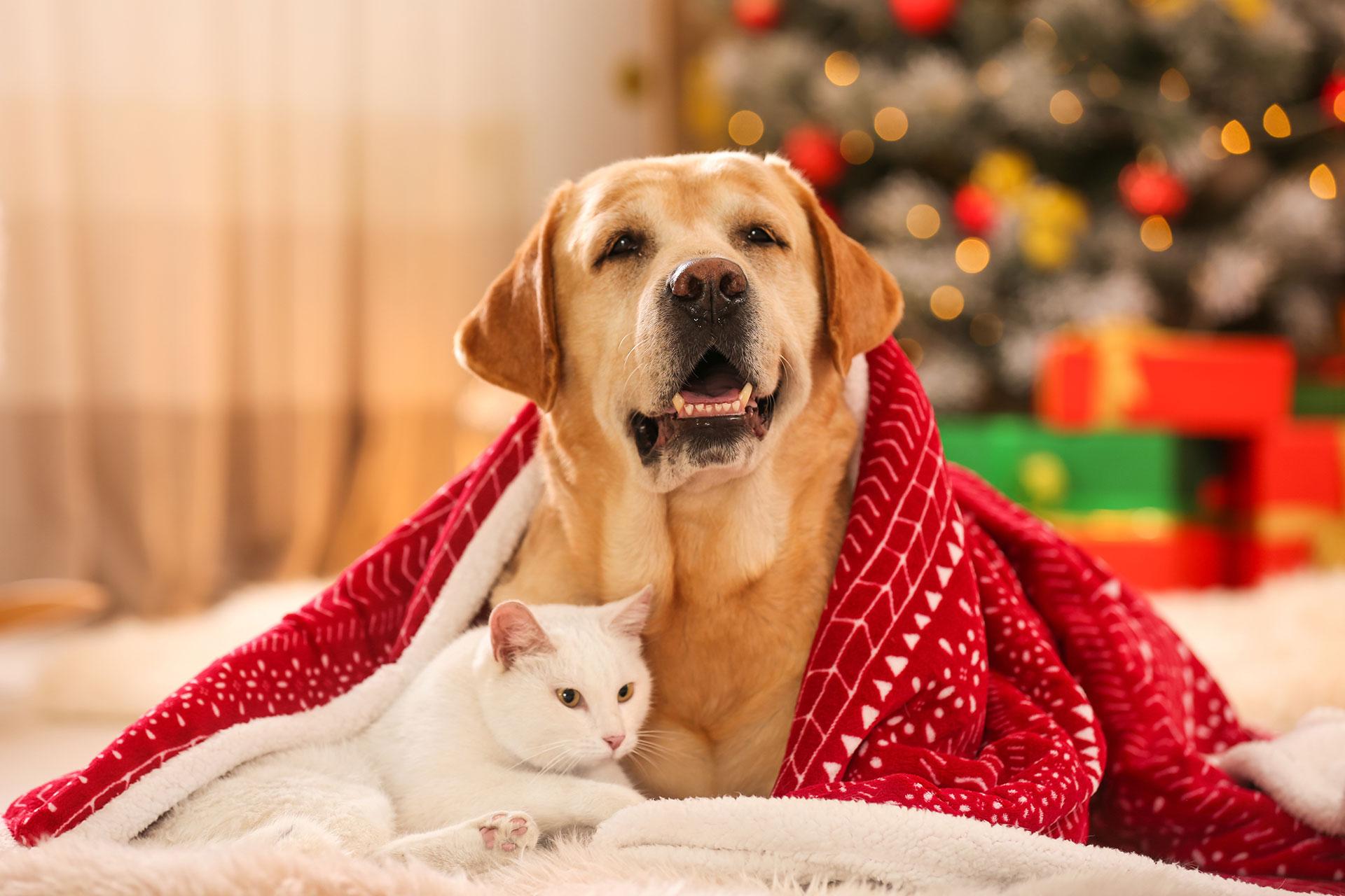 Święta Bożego Narodzenia-trudny czas dla zwierząt domowych - Zdjęcie główne