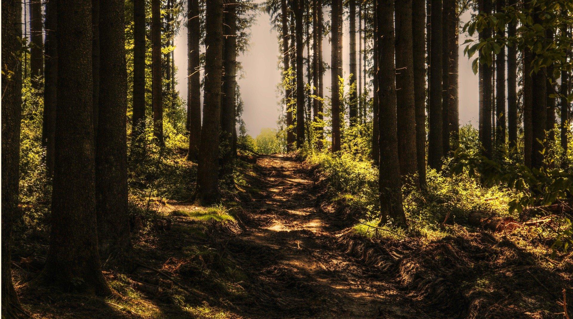 Mieszkanka Brzozowa z wnukami zgubiła się w lesie - Zdjęcie główne