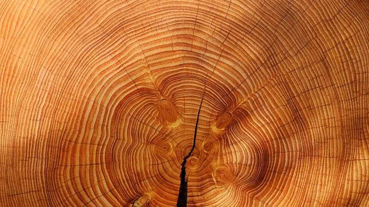 Drewniane domy szkieletowe - pomysł w sam raz na naszą kieszeń - Zdjęcie główne