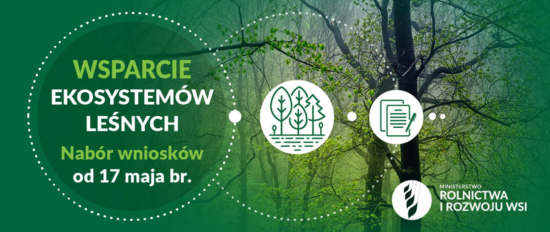 GMINA SANOK: Jesteś właścicielem prywatnego lasu? Sprawdź jak uzyskać wsparcie - Zdjęcie główne