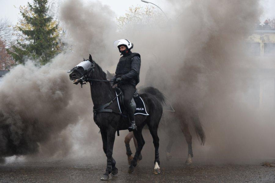 """Policyjne konie galopem """"przeszły"""" egzamin  - Zdjęcie główne"""
