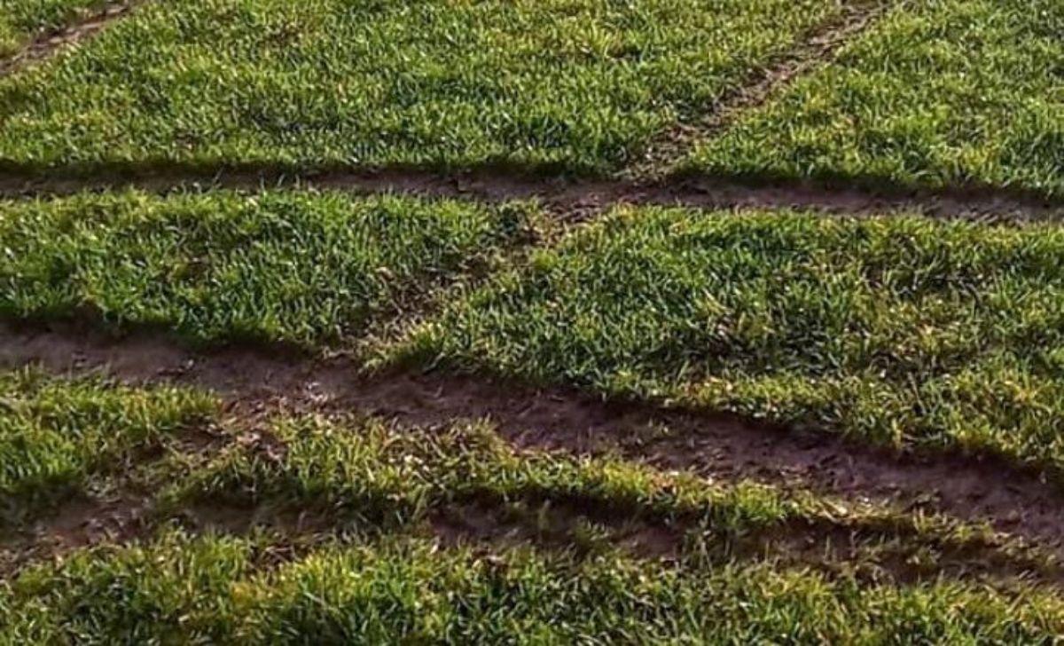 Kompletnie zniszczona murawa stadionu SKS Pogórze Srogów Górny [FOTO] - Zdjęcie główne