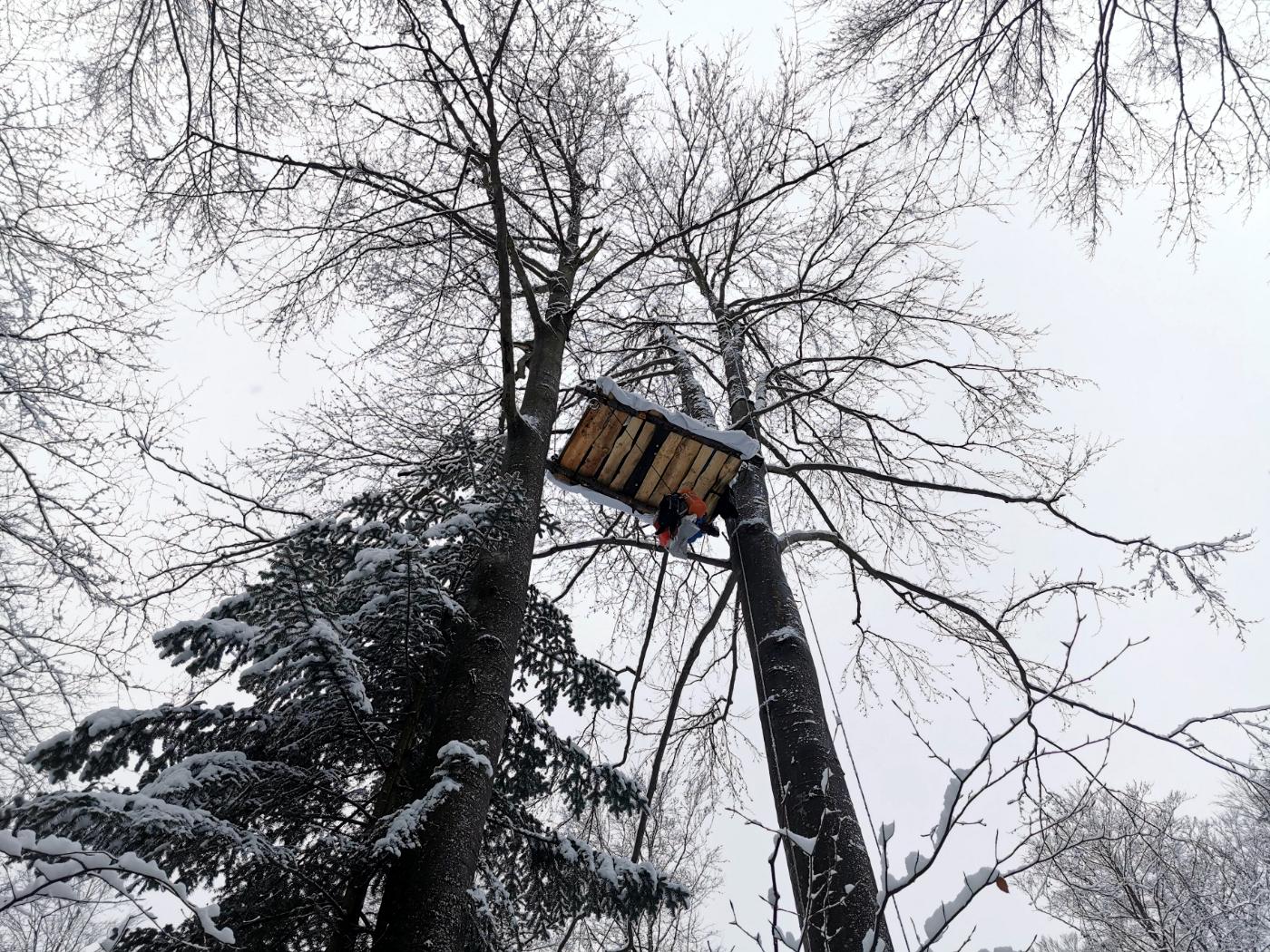 Największa blokada wycinki w Puszczy Karpackiej  - Zdjęcie główne