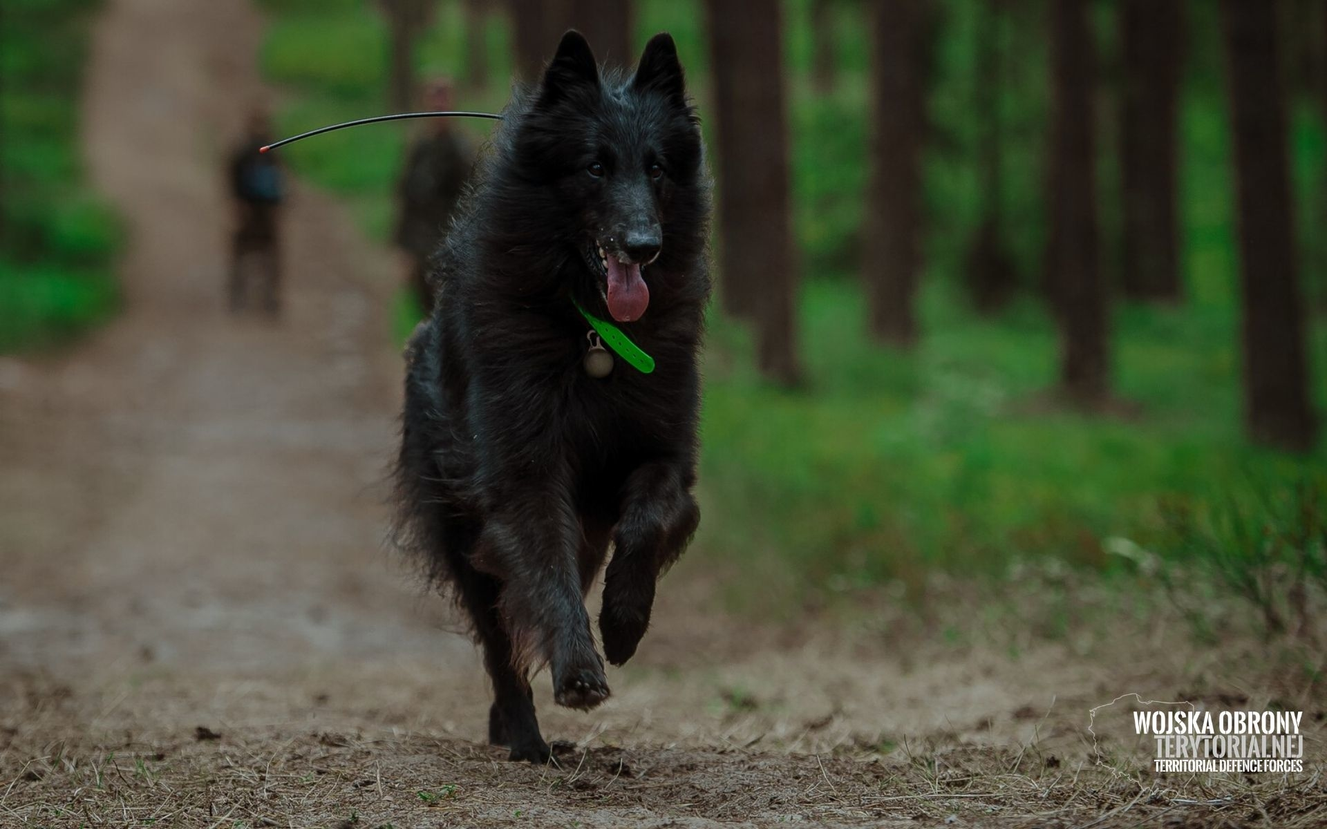 Poznajcie Aresa - pierwszego ratowniczego psa w Wojsku Polskim [FOTO] - Zdjęcie główne
